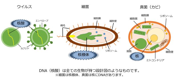 紫外線による殺菌の原理